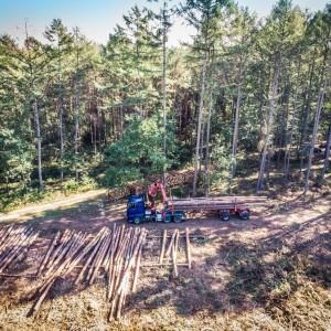 wycinka drewna