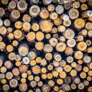 produkcja drewna opałowego