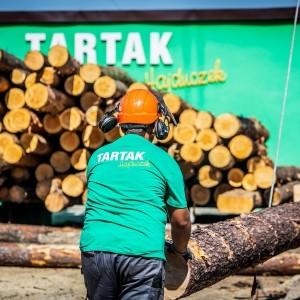 drzewna w tartaku