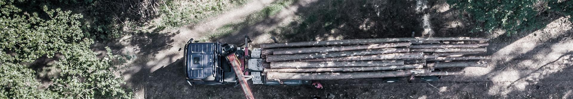 drewno do przetworzenia